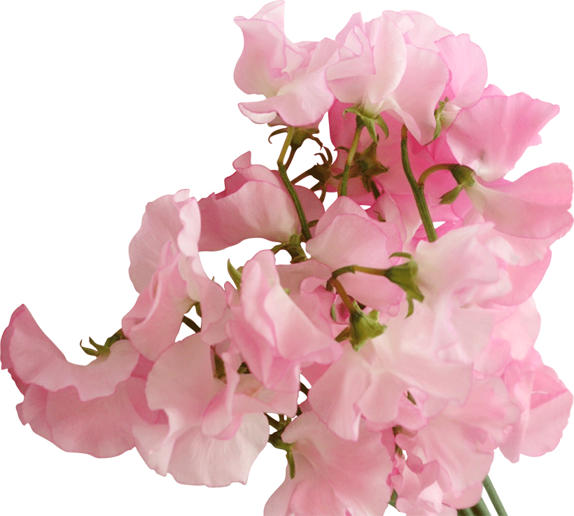 『花摘み会2020』準備中